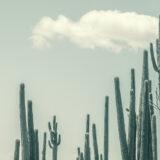 cactusoax